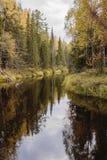 Op de Rivier van September Mekhrenga in het Arkhangelsk-gebied van Rusland Stock Fotografie