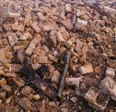 Op de ruïnes Stock Foto