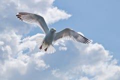 Op de Vleugels van een Meeuw Stock Afbeeldingen