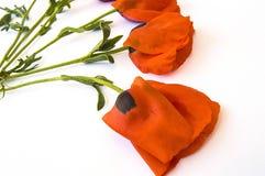 Op de witte grond zijn papaverbloemen, doorbladert de papaver, de beste papaverbloemen voor projecten en ontwerpen, Royalty-vrije Stock Foto's