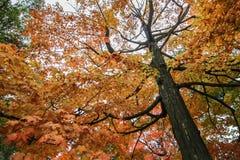 Op door de bladeren Stock Foto