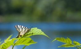 Op een blad dichtbij de rivier Stock Afbeelding