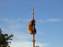Op een boom Stock Afbeeldingen