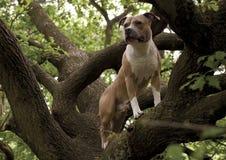 Op in een boom Royalty-vrije Stock Afbeeldingen