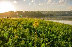 Op een groen gazon in de vroege mistige ochtend royalty-vrije stock afbeelding
