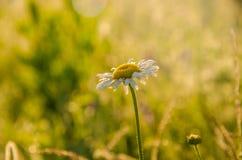 Op een groen gazon in de vroege mistige ochtend royalty-vrije stock fotografie