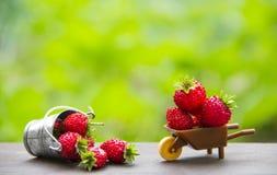 Op een groene achtergrond plaatsen een kruiwagen en een emmer met bessen van rode aardbeien inschrijving stock foto's
