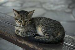 Op een houten bank ligt een dakloos droevig katje stock foto