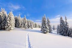 Op een ijzige mooie dag onder hooggebergte en pieken zijn magische die bomen met witte pluizige sneeuw worden behandeld Stock Fotografie