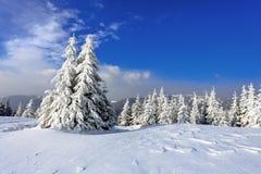 Op een ijzige mooie dag onder hooggebergte en pieken zijn magische die bomen met witte pluizige sneeuw worden behandeld Royalty-vrije Stock Afbeeldingen