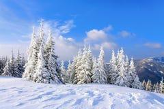 Op een ijzige mooie dag onder hooggebergte en pieken zijn magische die bomen met witte pluizige sneeuw worden behandeld De dag va Stock Foto
