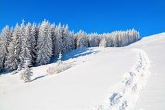 Op een ijzige mooie dag onder hooggebergte zijn magische die bomen met witte pluizige sneeuw tegen het magische landschap worden  Stock Foto's