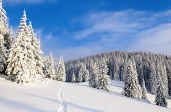 Op een ijzige mooie dag onder hooggebergte zijn magische die bomen met witte sneeuw tegen het magische de winterlandschap worden  Stock Afbeelding