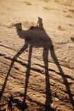 Op een kameel Royalty-vrije Stock Afbeeldingen
