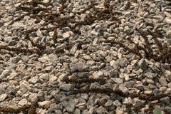 Op een laag van puin zijn okkernootbloemen in het zonlicht royalty-vrije stock foto