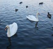 Op een meer in de ochtend royalty-vrije stock foto's