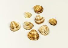 Op een witte achtergrond zijn er verscheidene overzeese shells Stock Foto's
