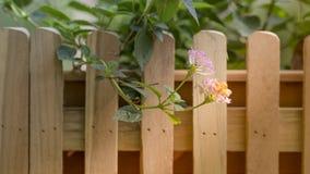 Op heldere zonneschijn en oranje en rode bloemen op de rand van een houten omheining met bruine kleur Stock Afbeeldingen