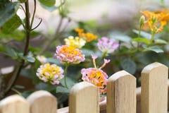 Op heldere zonneschijn en oranje en rode bloemen op de rand van een houten omheining met bruine kleur Royalty-vrije Stock Fotografie