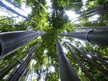 Op het bamboe Stock Afbeelding