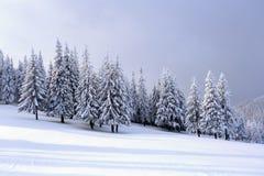 Op het brede gazon zijn er vele sparren die zich onder de sneeuw op de ijzige de winterdag bevinden stock afbeelding