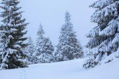 Op het gazon met witte sneeuw wordt behandeld is er een vertrappelde weg dat tot het dichte bos in aardige de winterdag die leidt Stock Afbeelding
