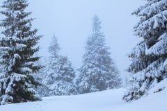 Op het gazon met witte sneeuw wordt behandeld is er een vertrappelde weg dat tot het dichte bos in aardige de winterdag die leidt Royalty-vrije Stock Foto