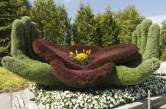 Op het Gebied van Vlaanderen: Poppy Symbol van Herinnering stock afbeelding