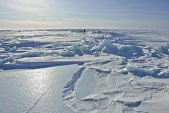 Op het ijs van het Noordpoolgebied. Royalty-vrije Stock Afbeeldingen