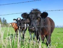 Op het landbouwbedrijf royalty-vrije stock afbeeldingen