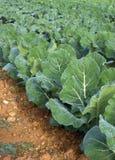 Op het landbouwbedrijf groene serie Stock Afbeelding