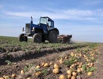 Op het landbouwbedrijf` s gebied graaft de tractor aardappels royalty-vrije stock afbeeldingen