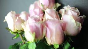 Op het roze rozen bespoten water op een zwarte achtergrond stock videobeelden