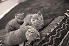 Op het tapijt liggen en katjes die omhoog eruit zien Royalty-vrije Stock Foto's