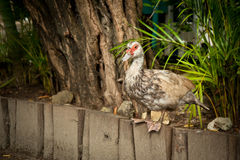 Op het vogellandbouwbedrijf stock foto's