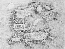 Op mica - een unieke manier om copieën van de rotstekeningen van de rotskunst te maken steekproef het museum Berg Altai stock foto's