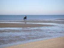 Op paard terug bij het strand Stock Afbeeldingen