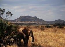 Op Samburu Stock Afbeelding