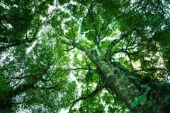 Op van de menings de groene Boomstam en boom achtergrond van de takken abstracte aard stock foto's