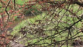 Op van rivier door rode bladeren stock videobeelden