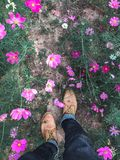 Op view close up foot walk on cosmos flower garden. Green Stock Images
