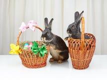 Op wit konijn als achtergrond in een mand en konijntje dichtbij een mand met paaseieren Stock Foto's