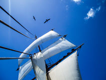 Op zee varend op een tallship, blauwe hemel Royalty-vrije Stock Fotografie