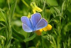 Op zoek naar nectar Stock Afbeelding
