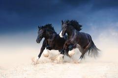 Op zwaar werk berekend zwart mooi paard twee die langs het zand galopperen Royalty-vrije Stock Fotografie