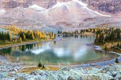 Opabin sjö och Autumn Colors i Yoho National Park Royaltyfria Bilder
