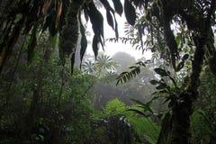 Opacifiez la forêt de Reserva Biologica Bosque Nuboso Monteverde, Costa Rica images libres de droits