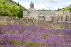 opactwo target4039_1_ Europe kwitnie France gordes lawendowego luberon Provence rzędów senanque Vaucluse Zdjęcia Royalty Free