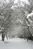 opadów śniegów drzewa Zdjęcia Royalty Free