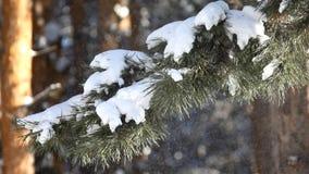 Opad śniegu zbiory wideo